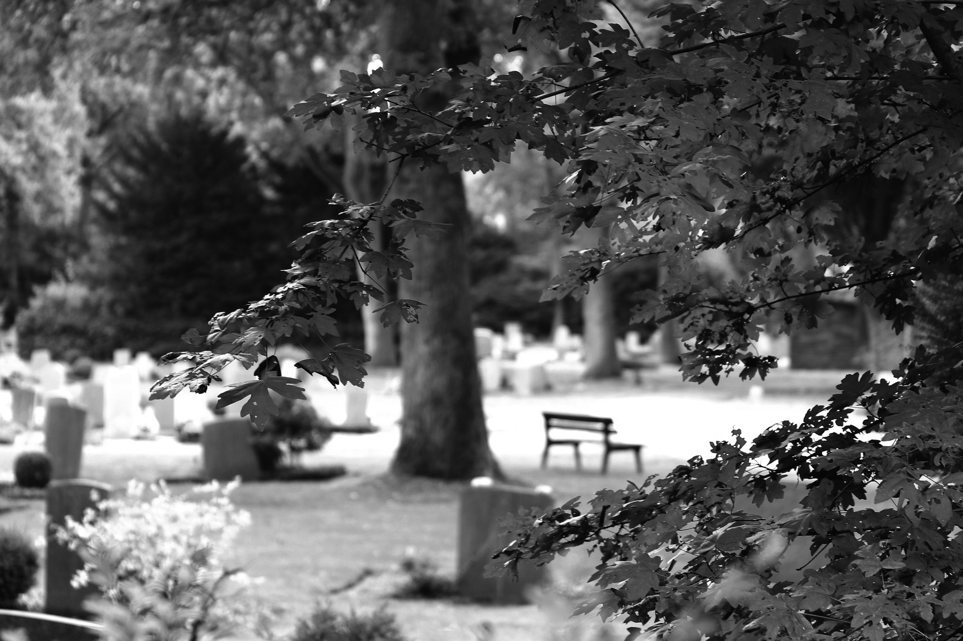 cemetery 3615139 1920 sw - Trauer und Abschied